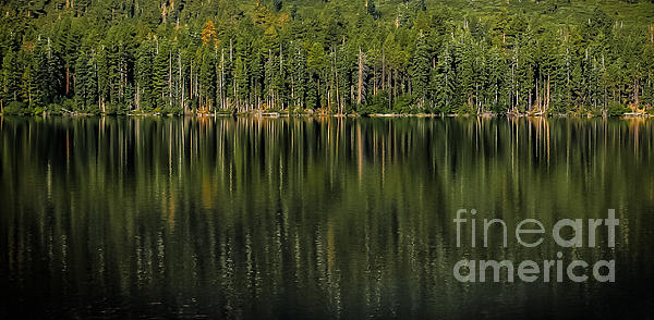 Forest Of Reflection Photograph - Forest Of Reflection by Mitch Shindelbower