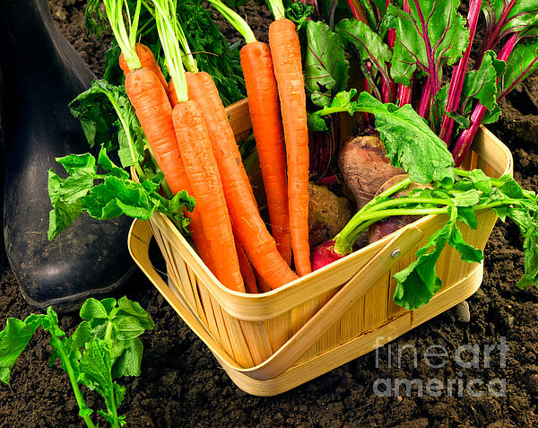 Produce Photograph - Fresh Picked Healthy Garden Vegetables by Edward Fielding