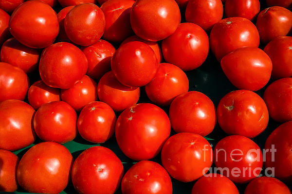 Ripe Photograph - Fresh Ripe Red Tomatoes by Edward Fielding