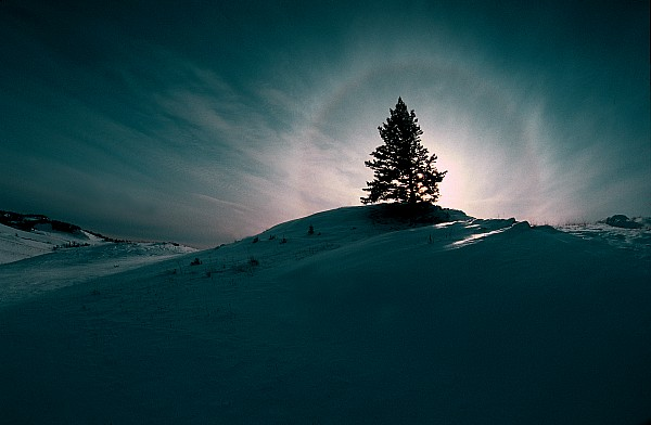 Boreal Photograph - Fv4157, Will Datene Pine Tree On A Hill by Will Datene
