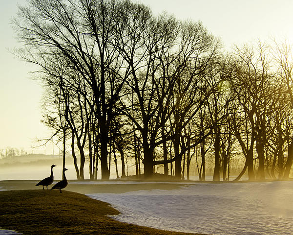 Golden Photograph - Geese Watching The Sunrise by Vicki Jauron