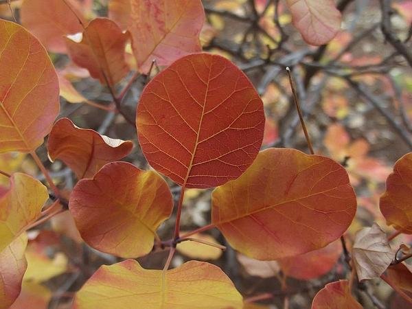 Fall Photograph - Glories Of Autumn by James Rishel