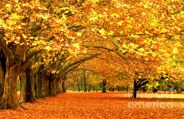 Golden Forest Photograph - Golden Forest by Boon Mee