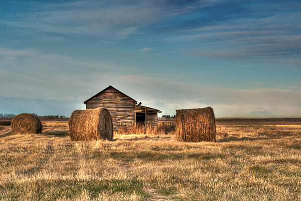 Golden Hay Photograph