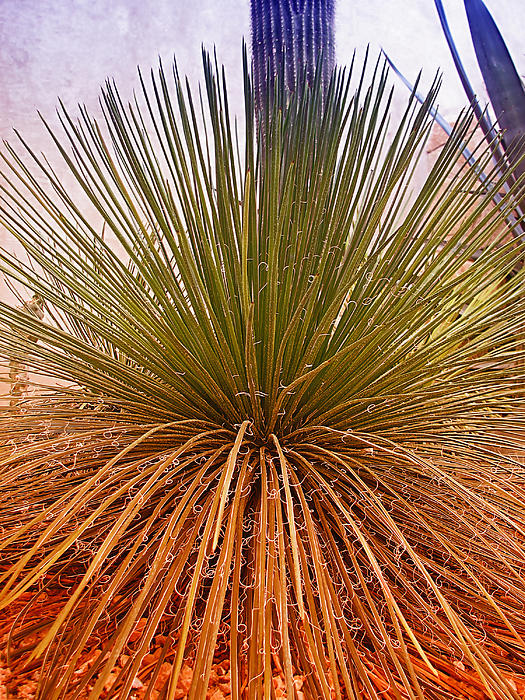 Yucca Photograph - Goood Hair Day by Wendy J St Christopher