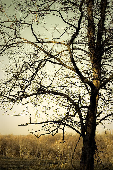 Tree Photograph - Graceful Tree by Cara Moulds