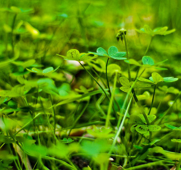 Photograph - Green Morning  by Andrew Raby