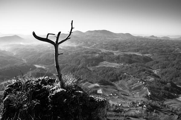 Landscapes Photograph - Guardian by Davorin Mance
