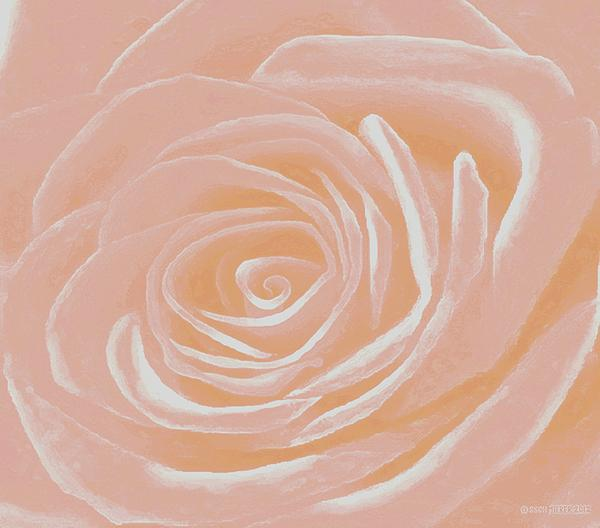 SophiaArt Gallery - Heart Of A Pale Pink Rose