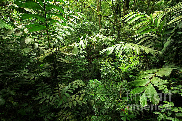 Rain Forest Photograph - Heart Of The Rain Forest - Costa Rica by Matt Tilghman