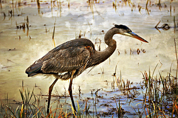 Birds Photograph - Heron On A Cloudy Day by Marty Koch