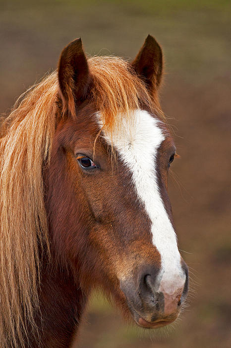 Outdoor Photograph - Horse Stare by Paul Scoullar