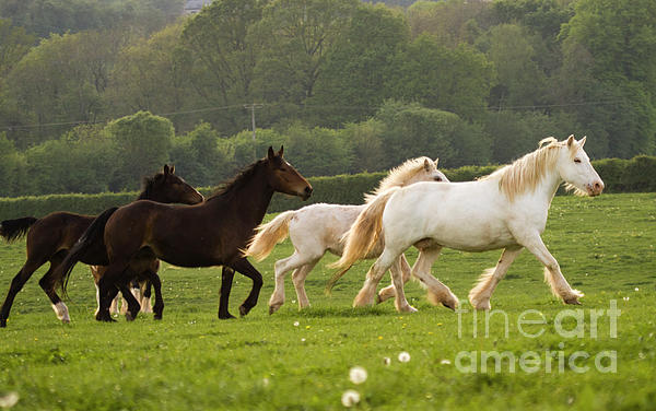 Horses On The Meadow Photograph