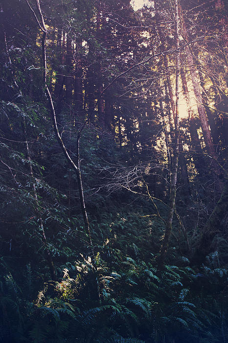 Purisima Creek Redwoods Open Space Preserve Photograph - I Realize by Laurie Search