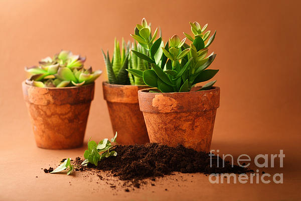 Indoor Plant Photograph - Indoor Plant by Boon Mee