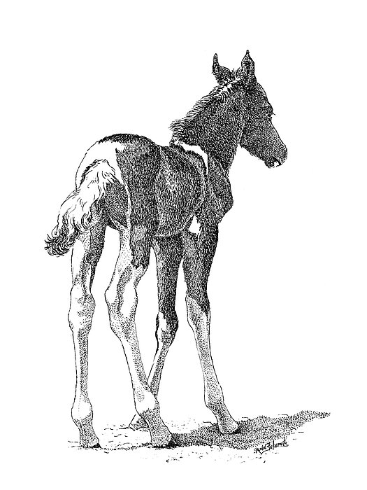 Foal Drawing - Innocence by Renee Forth-Fukumoto