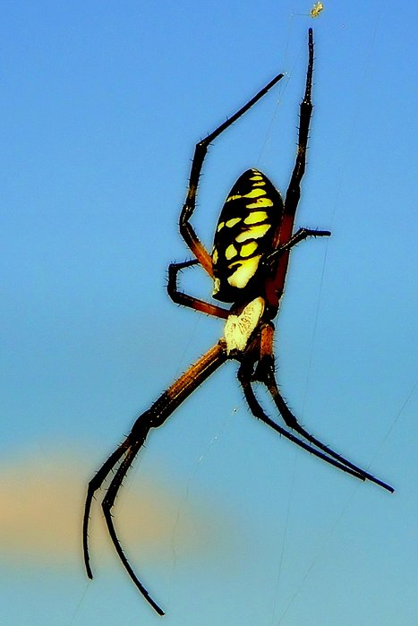 Spiders Photograph - Itsy Bitsy Spider by Karen Wiles