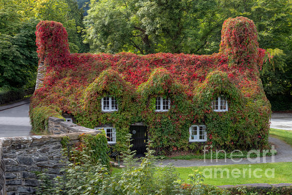 Ivy Cottage Photograph  - Ivy Cottage Fine Art Print