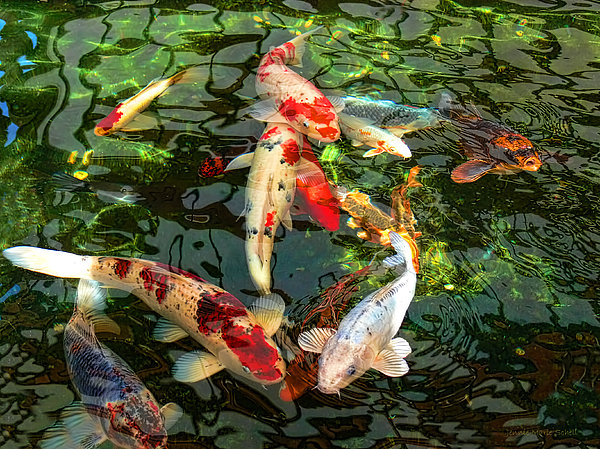 Japanese koi fish pond greeting card for sale by jennie for Japanese koi carp paintings