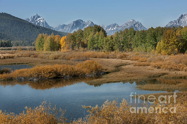 Grand Teton Photograph - Kiss Of Fall In The Grand Tetons by Sandra Bronstein