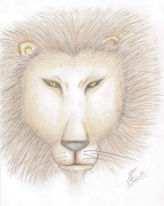 Animals Drawing - Leo by Marc Chambers