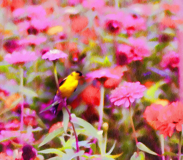 Little Birdie In The Spring Photograph - Little Birdie In The Spring by Bill Cannon