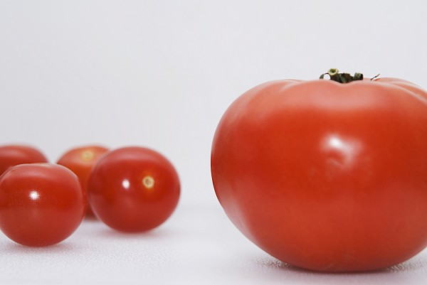 Close Shot Photograph - Little Tomatoes And One Big Tomato by Marlene Ford