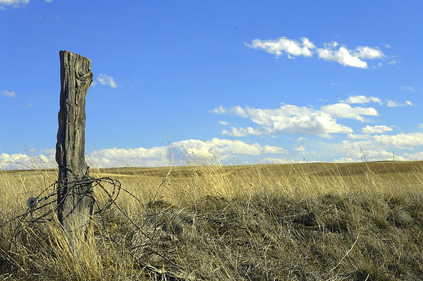 Lone Barbed Post Photograph  - Lone Barbed Post Fine Art Print