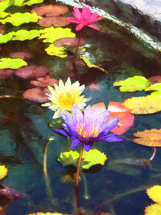 Lotus Pond Photograph  - Lotus Pond Fine Art Print