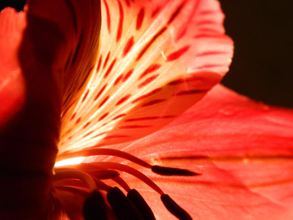 Blooms Photograph - Love Is In Bloom by Tara Miller