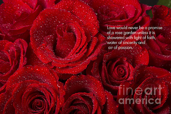Love Photograph - Love Would Never Be A Promise Of A Rose Garden by James BO  Insogna