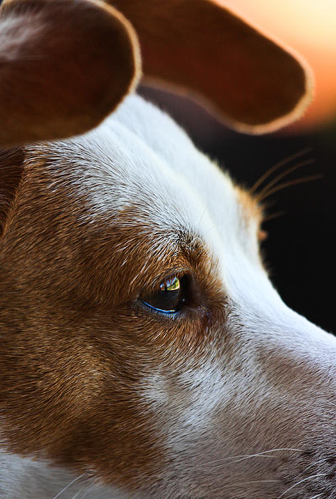 Rescue Dog Photograph - Maggie May by Mark Alder