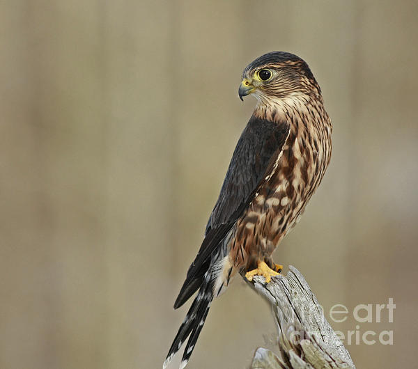 Inspired Nature Photography By Shelley Myke - Magical Moments with Merlin
