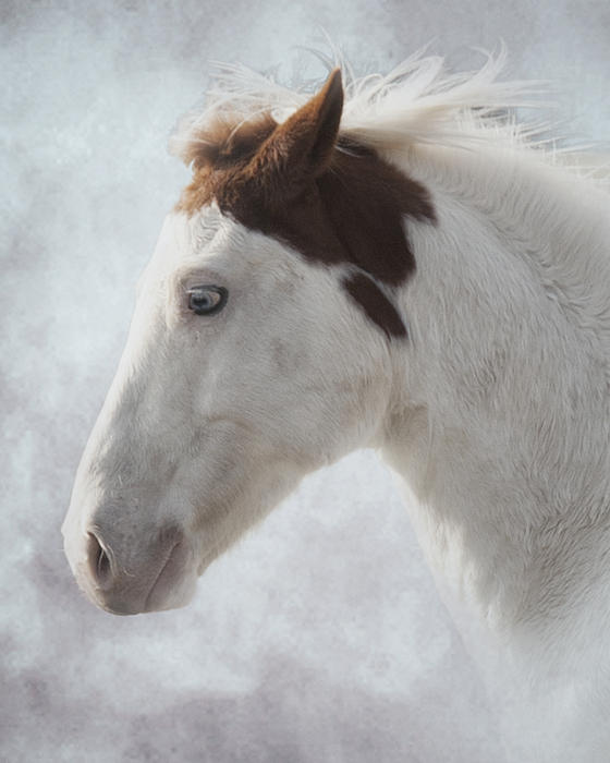 Equine Photograph - Medicine Hat by Ron  McGinnis