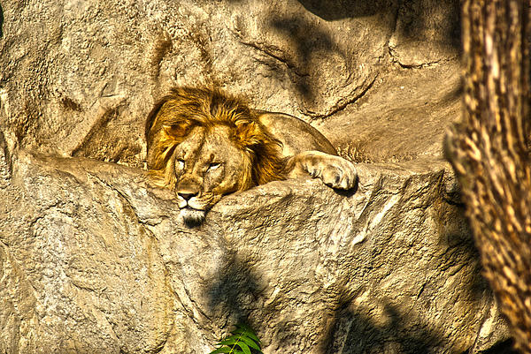Animals Photograph - Midday Siesta by Joe Bledsoe