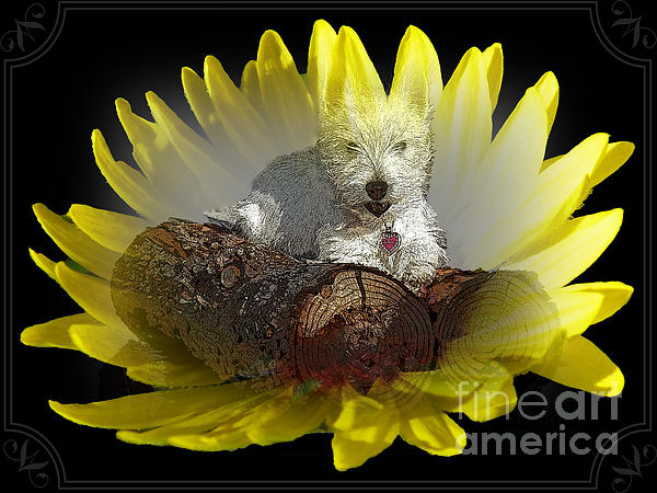 Photography Moments - Sandi - Miss Daisy in a Flower - West Highland White Terrier Puppy