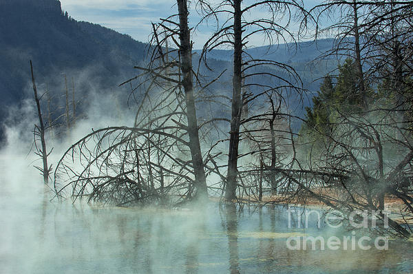 Yellowstone Photograph - Morning Mist At Mammoth Hot Springs by Sandra Bronstein