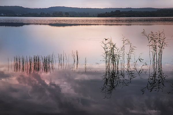 Nature Photograph - Morning Nocturne. Ladoga Lake. Northern Russia  by Jenny Rainbow