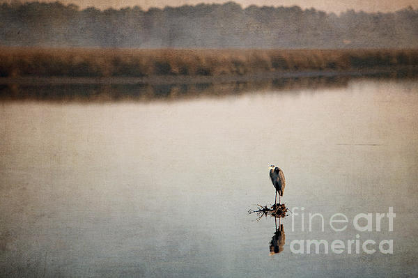 Birds Ocean Springs Mississippi Texture Photograph - Morning Solitude by Joan McCool