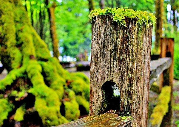 Moss Photograph - Mosspost by Benjamin Yeager