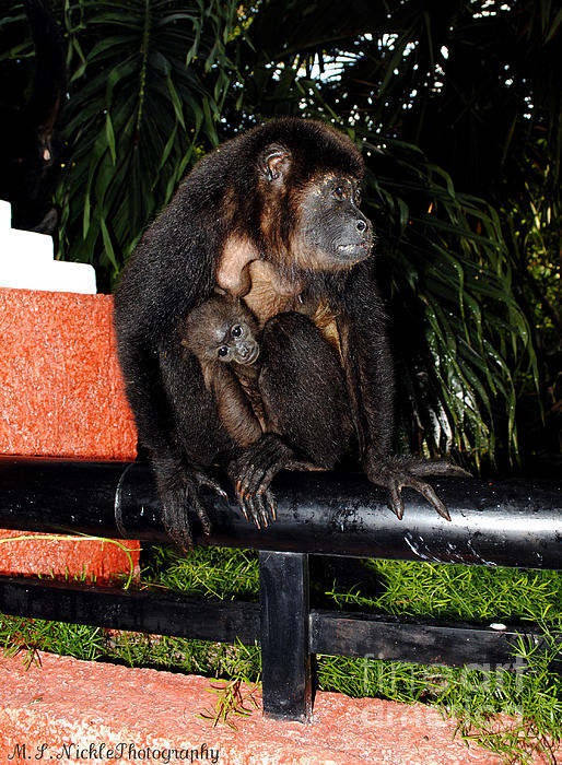 Howler Monkeys Photograph - Mother And Child by Melissa Nickle
