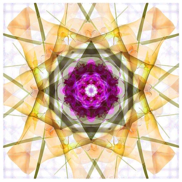 Flower Photograph - Multi Flower Abstract by Mike McGlothlen