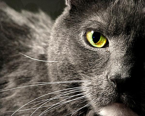Cat Photograph - My Eyes On You by Diana Angstadt