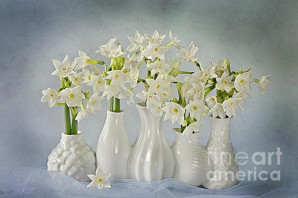 Narcissus Photograph - Narcissus paperwhites by Jacky Parker