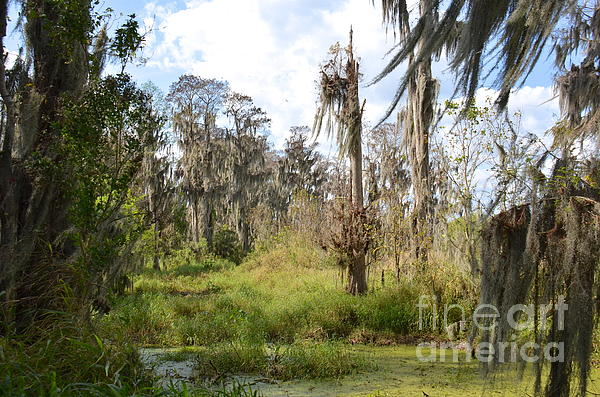 Florida Photograph - Natural Beauty by Carol  Bradley