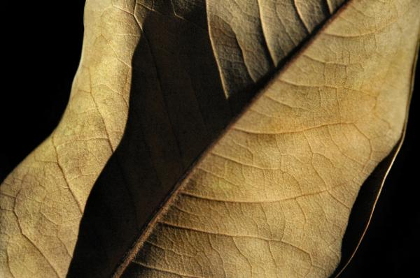 Natural Seduction Photograph  - Natural Seduction Fine Art Print