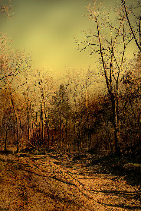 New Road To Travel Photograph  - New Road To Travel Fine Art Print