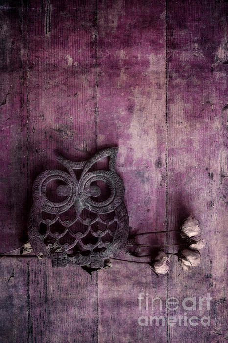 Nocturnal In Pink Photograph  - Nocturnal In Pink Fine Art Print