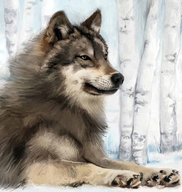 northern rocky mountain wolf canvas prints and northern rocky mountain wolf canvas art for sale