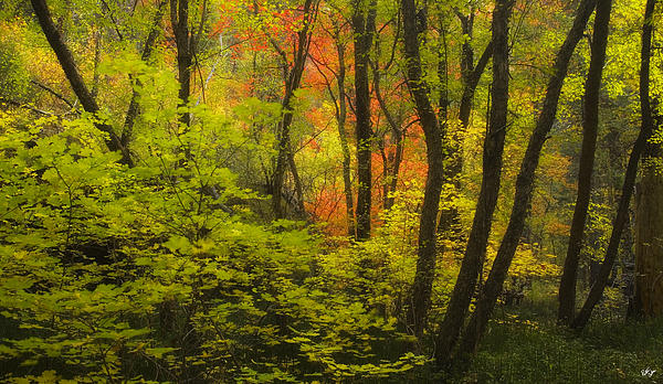 Oak Creek Splendor Photograph  - Oak Creek Splendor Fine Art Print